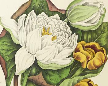 Illustration : plantes et fleurs.