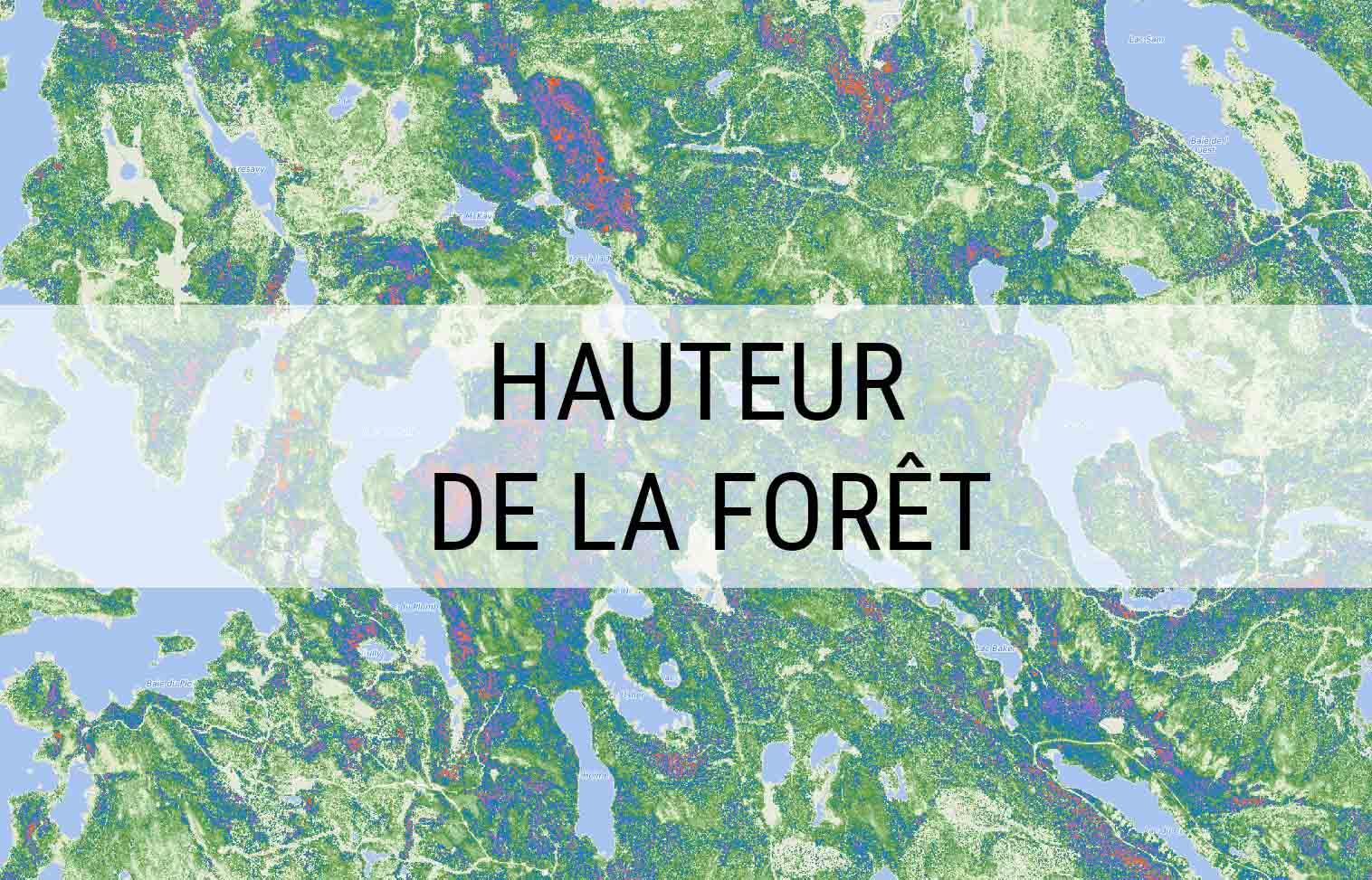 HAUTEUR DE LA FORÊT