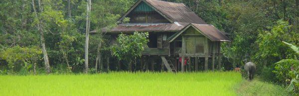 L'Euphorie du mois:Indonésie
