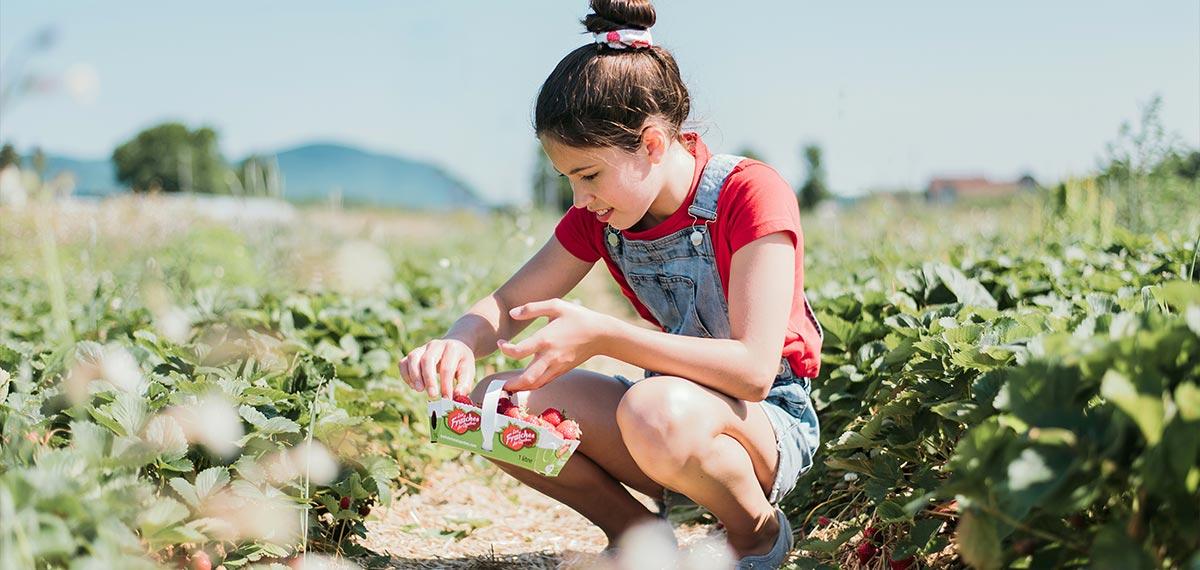 Autocueillette des fraises du Québec